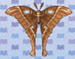 oak-silk-moth.jpg