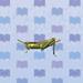 rice-grasshopper.jpg