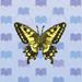 tiger-butterfly.jpg