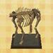 mammoth torso