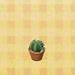 round mini cactus