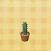 tall mini cactus