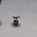 white-azalea start