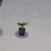 y.-hibiscus start